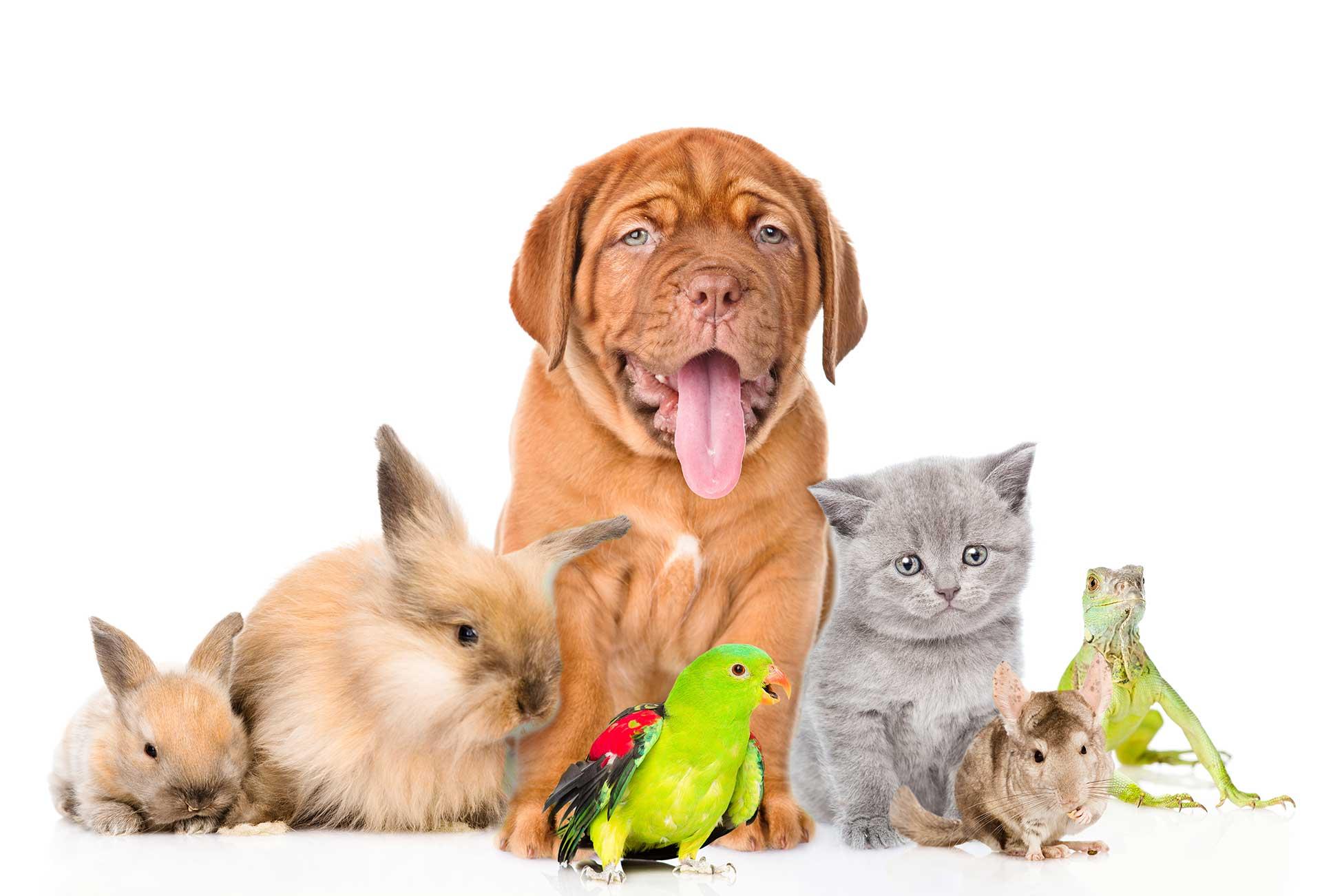 Картинки мультяшных животных для распечатки зависимости типа